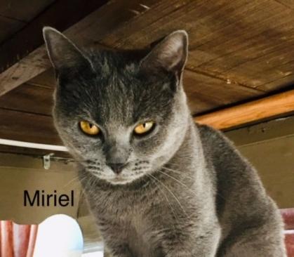 Miriel3